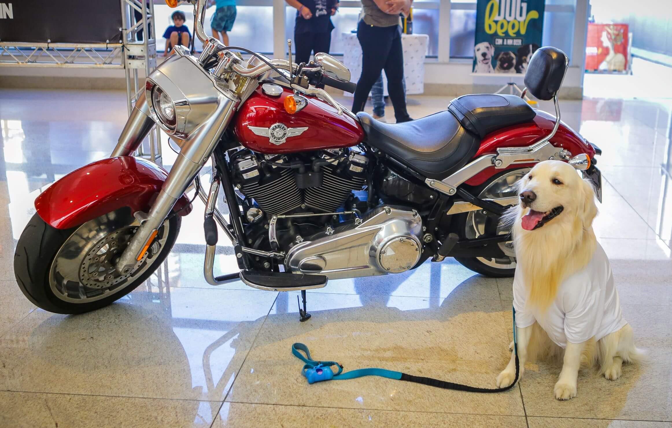 Cineminha Pet Friendly